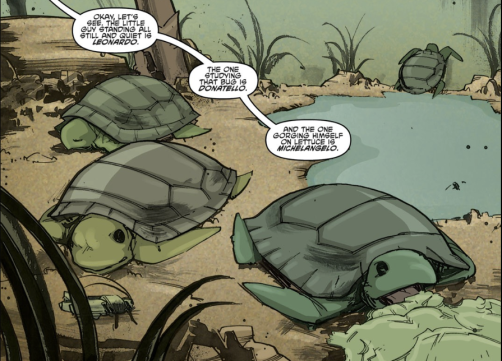 meet the turtles